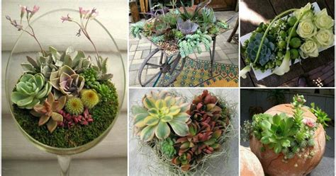 ideas de plantas facilisimo com