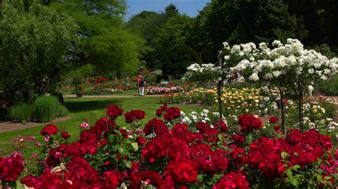 Related Keywords & Suggestions For Jardin De Rosas