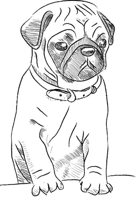printable drawing pages  wolves dog drawing simple puppy sketch pug art