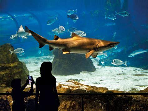 bureau poste louvre l aquarium de isic 28 images l aquarium de licencie
