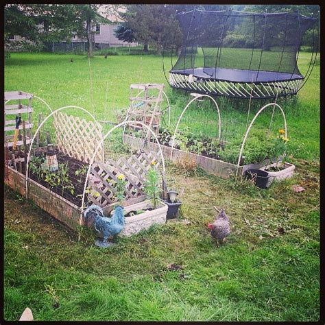 how to keep chickens out of garden almost wordless wednesday hillbilly raised bed ww a