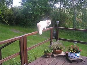 Katzen Aus Garten Vertreiben : wie vertreibt man katzen aus dem garten so kann man himbeeren auf dem balkon anpflanzen wie das ~ Frokenaadalensverden.com Haus und Dekorationen