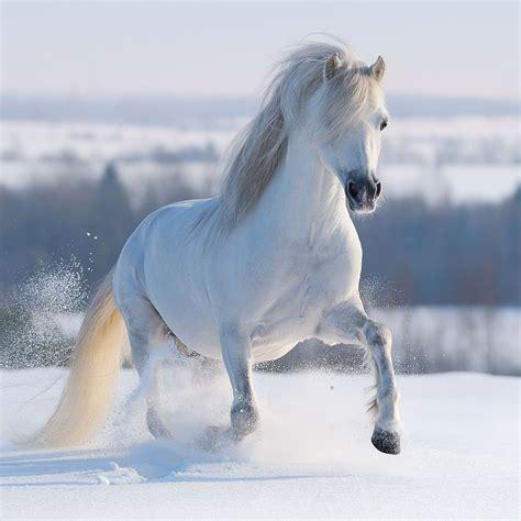 süße pferde bilder das pferd im islam