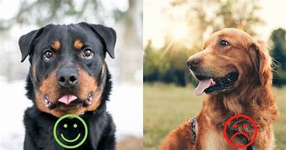 Dog Scorpio Breeds Thethings Perfect Would Dogs