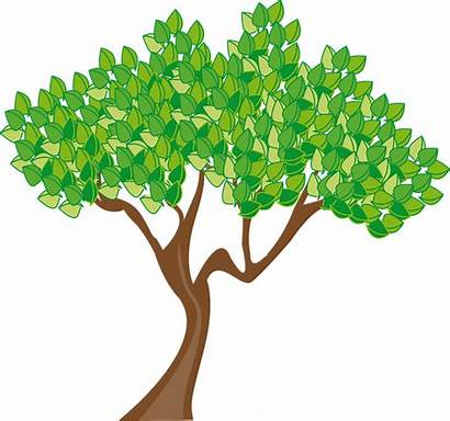 Tree Clipart Deciduous Summer Clipground Trunk