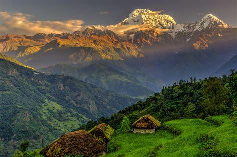 Daknang augu veselības ekstrakti no Himalaju dabas