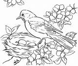 Coloring Birds Pages Printable Adult sketch template
