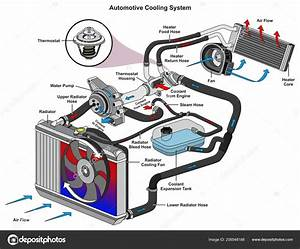 Automotive Cooling System Infographic Diagram Showing Process All Parts Included  U2014 Stock Vector