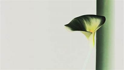 Minimal Inverted Lily Nature Flower Simple Macbook