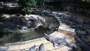 Tour Of Madras Crocodile Park In Chennai 3 Wheels On