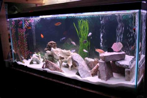 Decorating Ideas For Fish Tank by Cichlid Aquarium Decorations Decor Ideasdecor Ideas