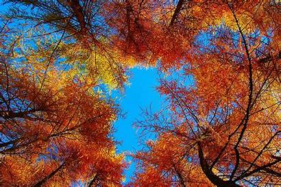 Autumn Sky Wallpapers Resolution Nature 4k Trees