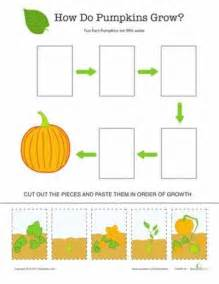 Life Cycle Of A Pumpkin Sequencing Worksheet by Search Results For Sequence Pumpkin Life Cycle