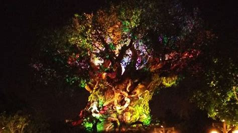 lion king tribute set animal kingdom projection show