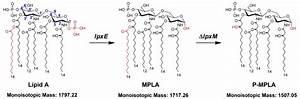 The Strategic Diagram Of Structural Modification Of E  Coli Lipid A
