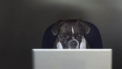 Peapix Dog Bing