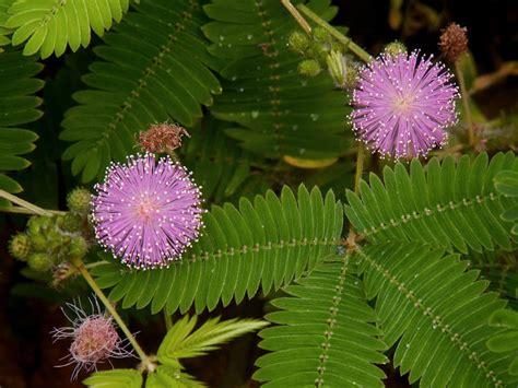 World Of Flowering Plants
