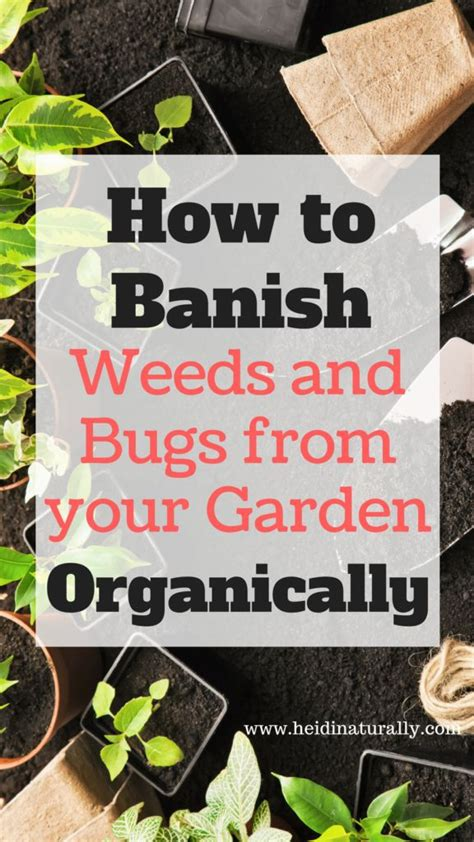 how to keep bugs away from patio 2588 best homeschooling tips images on