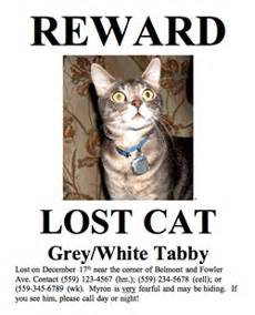 missing cat poster posters 5 5 55 missing pet partnership