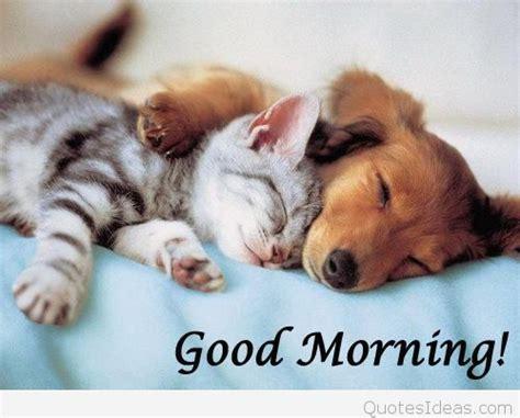 funny goodmorning monday dog picture  quote