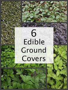 6 Edible Ground Cover Plants For Your Yard - Homestead ...
