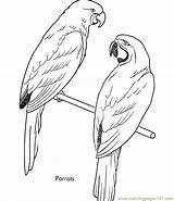 Coloring Parrots Coloringpages101 sketch template