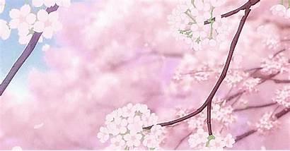 Blossom Cherry Kawaii Anime Sakura Gifs