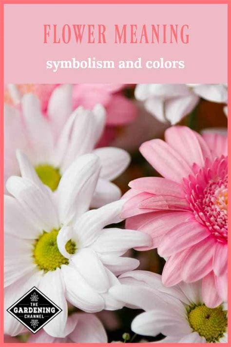 flower meaning symbolism  colors gardening channel
