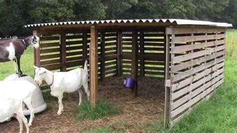 goat shelter   pallets youtube