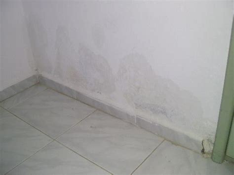 Damp Wall Of Water Coming Through Every Time You Showered