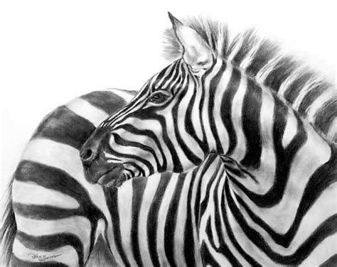Images Of Easy Zebra Pencil Drawing Golfclub