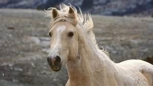 Cloud's Legacy: The Wild Stallion Returns | Wild Horse ...  Wild