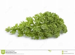 Single Curly Kale Leaf Royalty Free Stock Images - Image ...