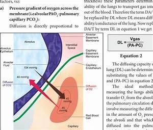 Components Of The Alveolar Capillary Membrane