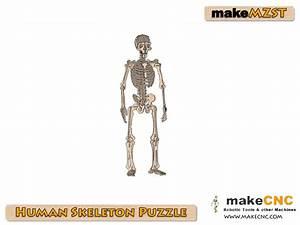 Human Skeleton Assembly Guide Pdf