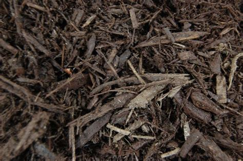 which mulch is best top 28 best bark mulch for alabama get the natural bark mulch and gardening mulch best