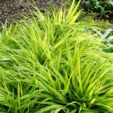 landscape grass types grass types sunset