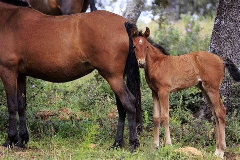 andalusian breed horse yuanyue bruce bi getty verwendung zucht andalusische