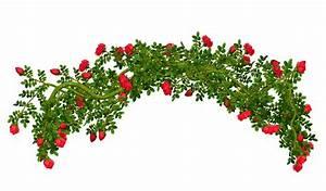 Shrub clipart flower bush - Pencil and in color shrub ...