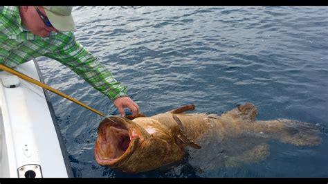 fishing boynton grouper goliath