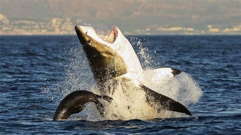 bloodthirsty wild animal  blog national geographic