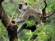 Indira Gandhi National Park and Wildlife Sanctu…
