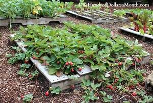 Strawberry Pallet Planters for Fresh Strawberries