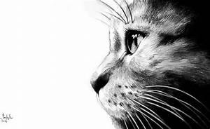 Steine Bemalen Katze : pin von christine schneider auf malen dibujos arte und animales ~ Watch28wear.com Haus und Dekorationen