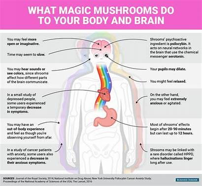 Mushrooms Magic Mind Effects Drugs Physical Shrooms
