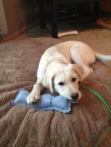 DIY Homemade Puppy Toy