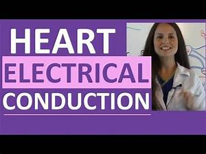 Electrical Conduction System Of The Heart Cardiac