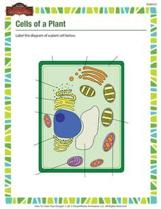 images  cells cells cells  pinterest