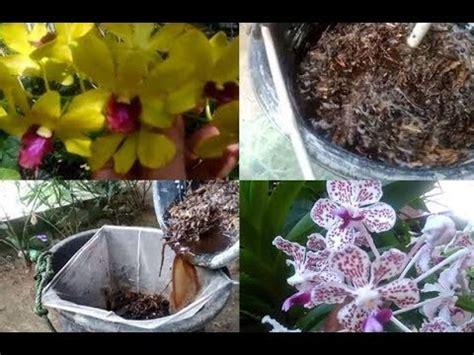 membuat pupuk cair  bunga anggrek  tanaman
