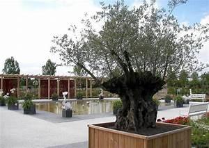Olivenbaum Im Topf : der olivenbaum pflege ~ Michelbontemps.com Haus und Dekorationen